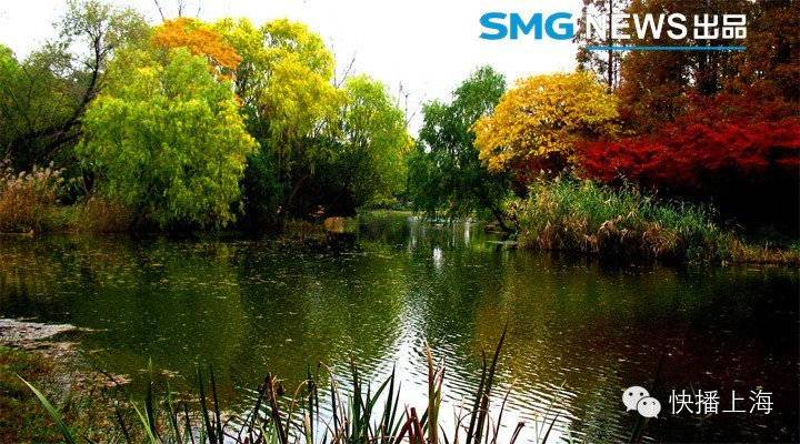 """又一波冷空气来临,花青素在植物体内施展魔法,使它们纷纷换上彩妆,昨天的大风,更是吹得街头落叶纷飞,上海由此进入了最美落叶季。""""上海发布""""微信、市绿化市容局微博及时推送各种落叶美图、发布赏秋地图。上海的秋天很短,彩色的世界转瞬即逝,还等什么,出去走一走,拿一杯咖啡,漫步于最美秋色之中吧。 十大赏秋片区  世纪公园秋色 1、浦东片区:银山路、明月路、碧云路、博兴路、锦绣路、科苑路、名人苑、金桥公园、世纪公园、东郊宾馆、豆香园  静安雕塑公园秋色 2、人民广场-静安区域:南京西路、常德路"""