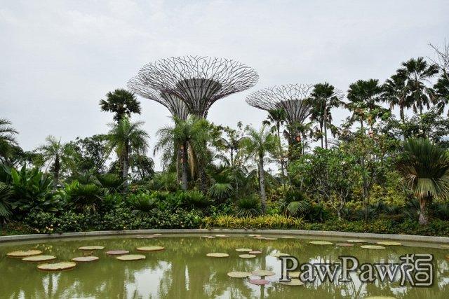 新加坡填海而出之滨海湾花园